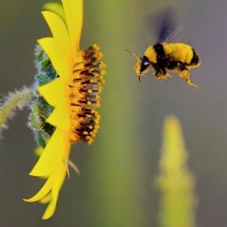 De qué manera la apicultura y las abejas pueden ayudar en la RSC de tu empresa
