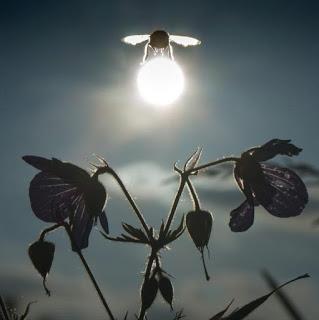 El triple corona del impacto de las abejas en la Sociedad, y cómo la tecnología puede ayudar a hacerlo exponencial